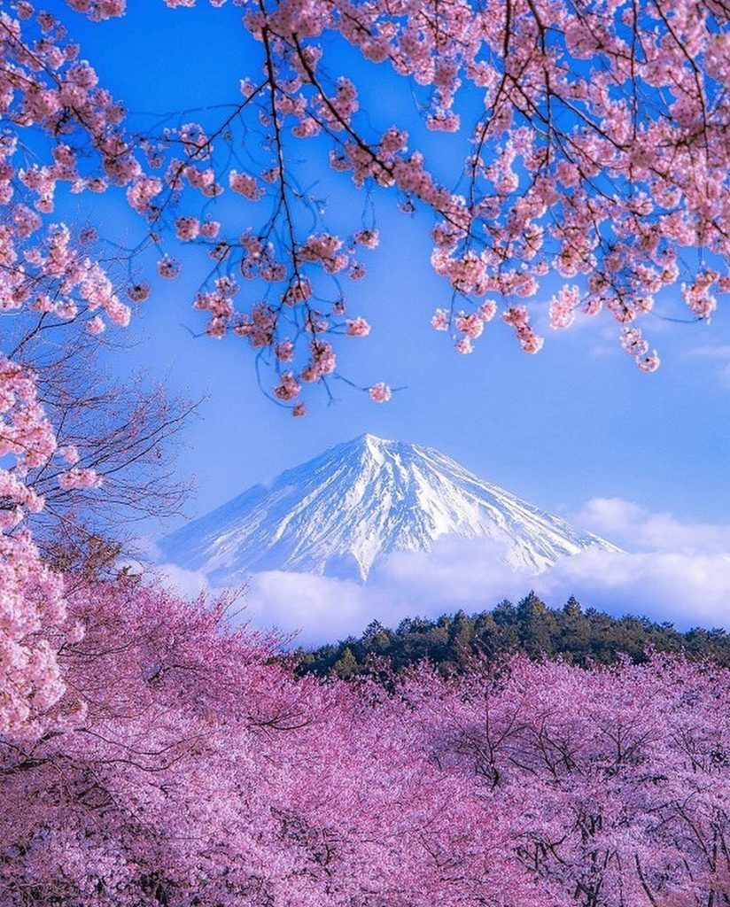 Some of the colours in Japan are just sensational. This image shows the beautifu...