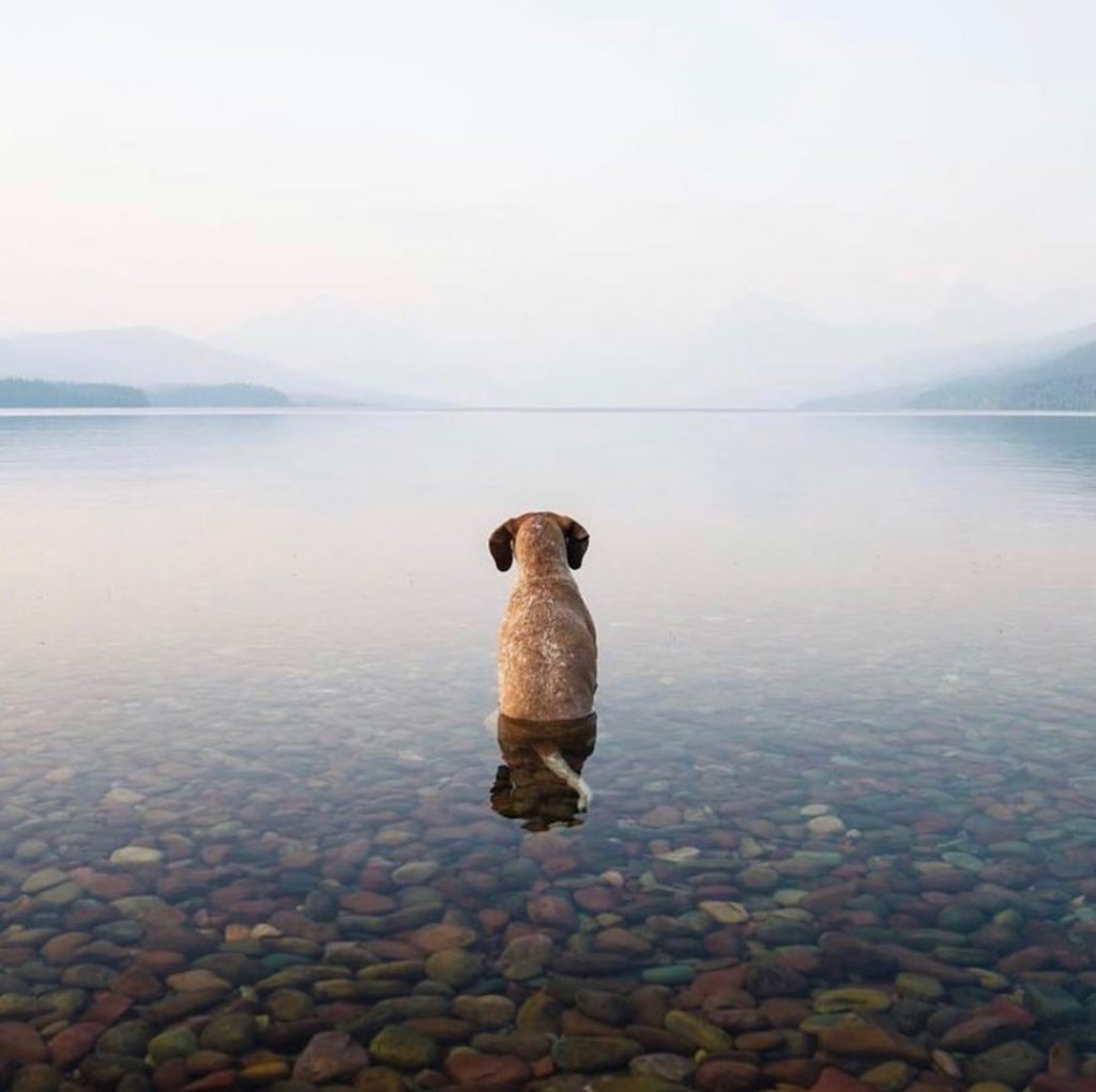 Cute dog at lake McDonald, Montana. Perfect scenery + cute puppy = what more cou...