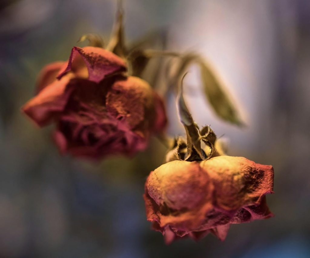 """""""I was capturing life and death. The flowers are dying and holding on for life.""""..."""