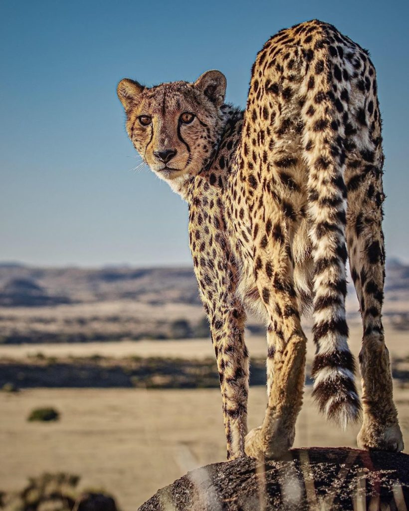"""""""I was at a cheetah sanctuary in South Africa - we were up on a hill for lunch w..."""