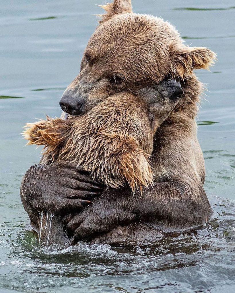 Bear Hug  Wonderful wildlife photography by @glenalsworthjr_  #wildlife #wildli...