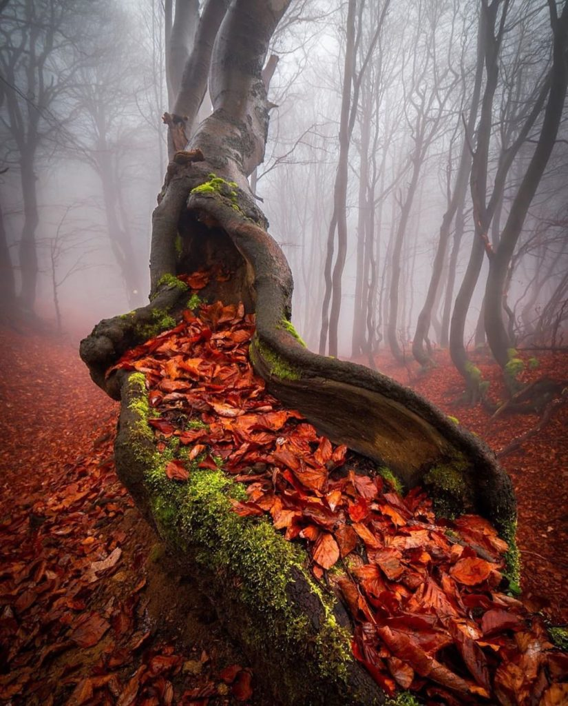 Photography by @lubo_prchal #czechrepublic #autumnleaves #winter #moodygrams  Se...