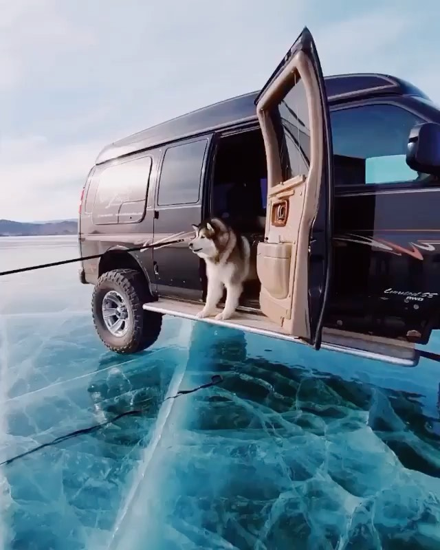 Doggo scared of the ice  Videography | @hobopeeba Curated by @steffeneisenacher ...