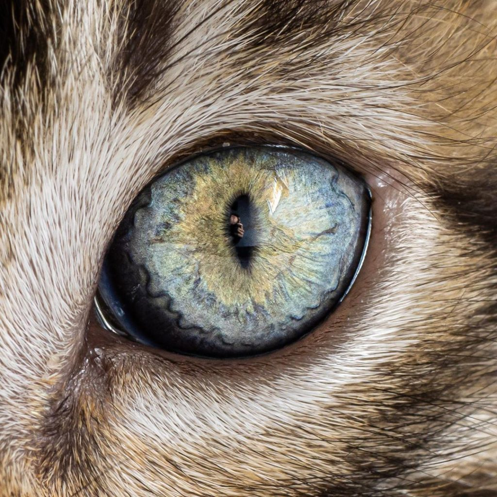 """If you guys think taking photos of cats is difficult, try getting macro shots o..."
